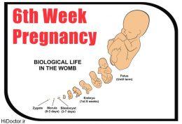 هفته های نخست بارداری و این عارضه ها