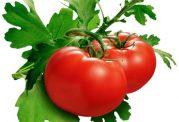 عکس های میوه گوجه فرنگی