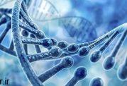 در تحقیقات دیابت از سلولهای افراد مبتلا به دیابت استفاده می شود