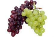عکس هایی از میوه انگور