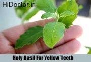 تجربه براقی دندان با ریحان