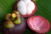 عکس های میوه ترگیل