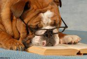 عادات غلط در زمان مطالعه