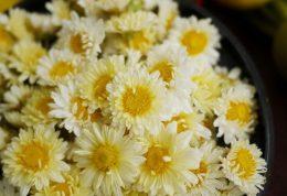 گل داوودی، گیاه درمانگر