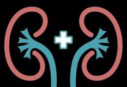 نقش ارزنده کلیه در سلامتی بدن