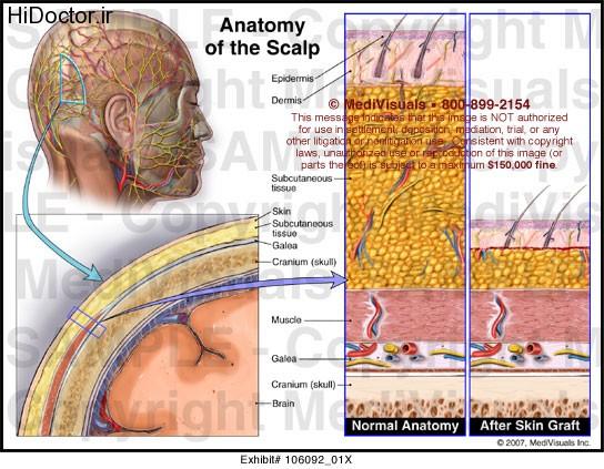 آناتومی پوست سر