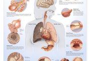 چند مورد از عوارض سیگار