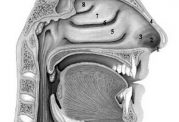 نقش حفره های بینی در آسم