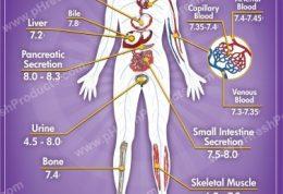 از  PH بدنتان و تنظیم آن چه می دانید