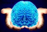 اطلاعاتتان را در زمینه مغز بالا ببرید