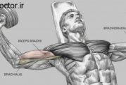 مسیرهای مثبت و  منفی در تمرینات بدنسازی