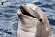 تحقیقات  دلفین ها و کشفیاتی در باره ابتلا به دیابت نوع 2