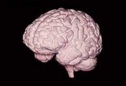 مزایای مغز بزرگ داشتن!