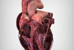 بیماریهای قلب و عروق از چه علائمی برخوردار هستند؟