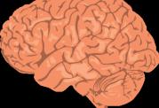روش مناسب برای پاکسازی مواد زائد از درون مغز