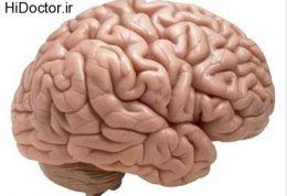روش تعیین جنسیت توسط مغز