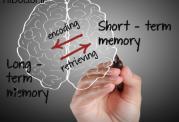 چگونگی عملکرد ذهن و حافظه