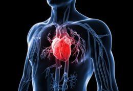ایمنی در برابر بیماریهای قلبی و عروقی