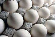 اهمیت مصرف تخم مرغ برای این رنج سنی
