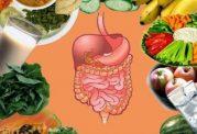 میوه های محافظ سلامتی روده ها