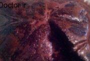 آموزش تصویری کیک هویج  ترکیه