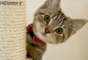 مشکلات روحی با پرورش گربه خانگی