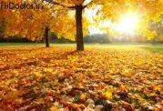 ارتباط افسردگی و بیمار شدن در پاییز