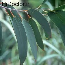 گیاهی مناسب ضدعفونی کردن