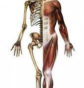 نکات جالب و حیرت آور در مورد بدن