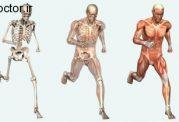 سوالات و پرسش های رایج در مورد بدن انسان