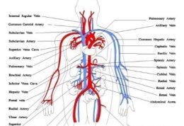 کاهش گردش خون با این علائم در بدن