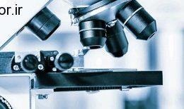موثر بودن پروتئین کبدی بر بالا رفتن میزان رشد سلول های انسولین