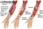 برای حجیم کردن عضلات بازو بخوانید