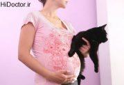 خانم های حامله و وجود این حیوان در محل زندگی