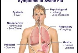 از آنفلوآنزای خوکی حذر کنید