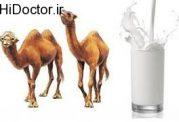 تاثیرات مفید شیر شتر بر امراض قندی
