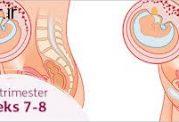 هفتمین هفته از بارداری