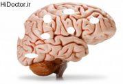 مراقبت از مغز با این روش ها