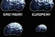ارتباط اندازه مغز و آی کیو