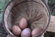 اهمیت خوردن تخم مرغ به خاطر قلب
