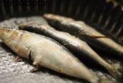 کیفیت ماهی را اینگونه فهمید