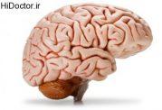 نقش مغز در زیاده روی در خورد و خوراک