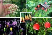 گیاهان سمی و در عین حال زیبا