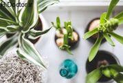 برای بهبود سلامت این گیاهان موثرند