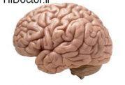 عادت به خواندن و صدای مغز