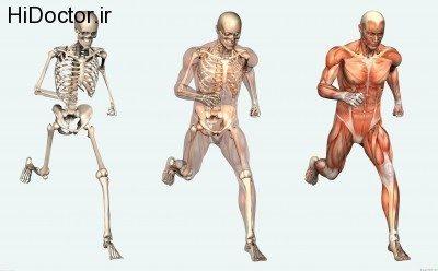 آناتومی بدن و این راز های ناگفته