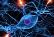 اطلاعات پزشکی در مورد عملکرد هورمون ها