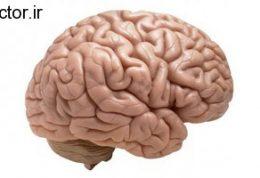قابلیتی جدید در مغز