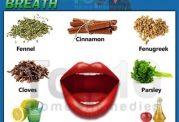 جویدن برگ اوکالیپتوس بوی بد دهان را از بین می برد