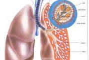 علایم هشدار دهنده یک عفونت خطرناک مجاری فوقانی تنفسی